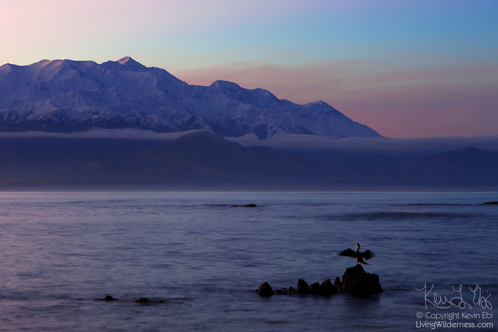 A spotted shag, also known as Parekareka (Phalacrocorax punctatus), dries its wings as the last light of day illuminates the Seaward Kaikoura Mountain Range. The range includes Mount Fyffe at 1602 meters (5256 ft) and Manakau at 2609 meters (8560 ft).