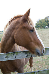 Profile of horse standing at a wooden pasture fence