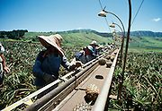 Pineapple fields, Lanai, Hawaii