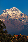Dhaulagiri (8167m), south east face at dawn with trekkers camp on Deurali Pass, Kali Kandaki valley en route Annapurna Himal, Nepal.