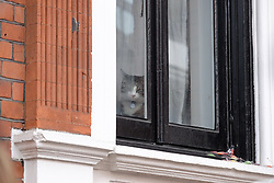 May 19, 2017 - London, United Kingdom - A cat at the Ecuadorian embassy as people wait for Julian Assange to come out and make a statement, in London, on May 19, 2017. (Credit Image: © Jay Shaw Baker/NurPhoto via ZUMA Press)