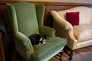 Palmerston, the resident cat of the Foreign and Commonwealth Office (FCO) sleeps on a winged armchair in the Ambassadors Meeting Room where senior foreign diplomats wait for official meetings, on 17th September 2017, in Whitehall, London, England. Palmerston is the resident Chief Mouser at the FCO who began his role in2016. Previously, he was from Battersea Dogs & Cats Home and is named after the former Foreign Secretary and Prime Minister Lord Palmerston.