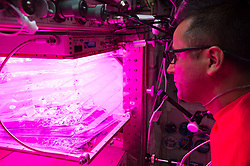 October 3, 2017 - Space - Crew members installed hardware to grow another crop of vegetables in space. NASA astronaut JOE ACABA prepared the Veggie facility for three different kinds of lettuce seeds as part of the VEG-03-D investigation. This is the first time seeds from multiple kinds of plants are being grown in the facility all at the same time. Understanding how plants respond to microgravity is an important step for future long-duration space missions, which will require crew members to grow their own food. Crew members on the station have previously grown lettuce and flowers in the facility. This new series of the study expands on previous validation tests. (Credit Image: ? NASA/ZUMA Wire/ZUMAPRESS.com)