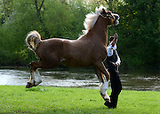 © Licensed to London News Pictures. 11/05/2012. Windsor, UK A horse leaps during its morning exercise at The Royal Windsor Horse Show in Windsor, England on May 11 2012. Photo credit : Stephen Simpson/LNP