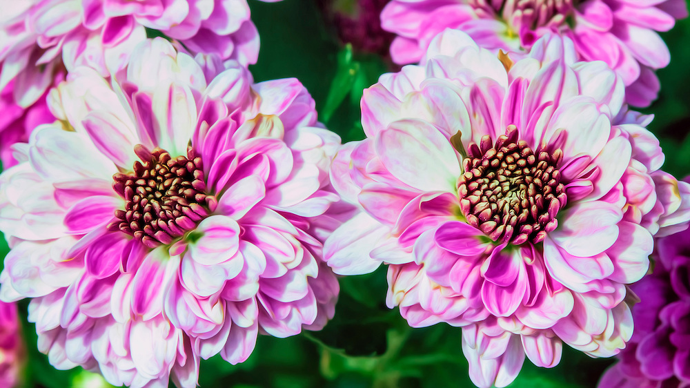Some pretty and colorful flowers to keep off your Friday.