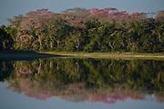 Aquidauana_MS, Brasil...Mata ciliar de um lago da fazenda Rio Negro no Pantanal...The lake riparian in Rio Negro farm in Pantanal...Foto: JOAO MARCOS ROSA / NITRO
