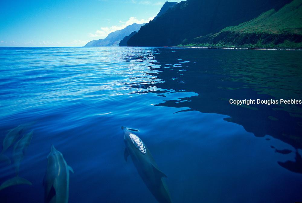 Dolphin, Napali Coast, Kauai, Hawaii, USA<br />
