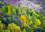 Deciduous trees of many colours autumn landscape, Mont Lozere, Cevennes national park, France