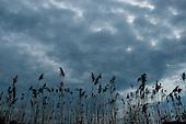 Broad Meadow Brook, Worcester, MA