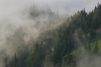 Misty mountainside North Cascades