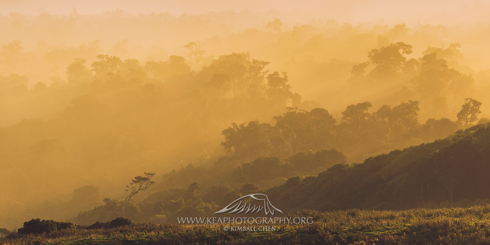 A large multi-image panoramic of the Catlins forest.  At the end of the day, a low-lying sun burns off the on-shore mist that blankets the coastal Catlins forest, at Tautuku Bay, New Zealand.