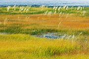 Grasses in a wetland habitat<br /> Jasper National Park<br /> Alberta<br /> Canada