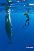 photographer Deron Verbeck and juvenile sperm whale, Physeter macrocephalus ( Endangered Species ), Kona, Hawaii Island ( the Big Island ), Hawaii, U.S.A.  ( Central Pacific Ocean ) MR 467
