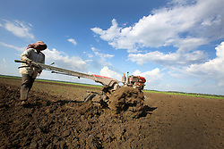 A farmer uses a walking tractor  or sometimes called an iron buffalo, to prepare fields before the wet season starts. The land could be used for rice agriculture or vegetable cultivation, landscape, Kampong Cham town, Kampong Cham Province, Cambodia.