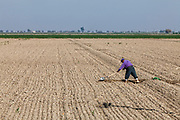 Worker shoveling a crop field. Fresno County, San Joaquin Valley, California, USA