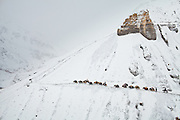 High above tree line, a winter caravan of traders relies on their sure-footed yaks to traverse a high pass - the only way up and down from the Afghan Pamir. Never a large tribe, Kyrgyz nomads roamed central Asia for centuries and were infamous for raiding caravans along the Silk Route...