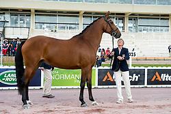Rebecca Hart, (USA), Schroeters Romani, - Horse Inspection Para Dressage - Alltech FEI World Equestrian Games™ 2014 - Normandy, France.<br /> © Hippo Foto Team - Jon Stroud<br /> 25/06/14