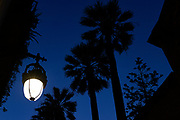 Palm trees and streetlamp. Sunset, above Carrer d'Elisabets, El Raval, Barcelona