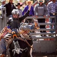 Bareback steer rider Jayce Harrison holds tight during the Jr High School Finals rodeo Friday at Red Rock Park in Gallup.