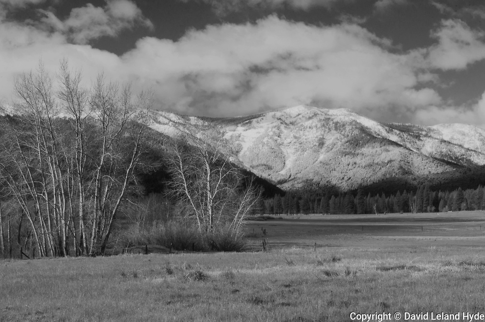 Cottonwoods, Grizzly Ridge, Fresh Snow, Green Pastures, Heart K Ranch, Genesee Valley, California Mountains, Black and White Art, Monotone, Black and White Photography