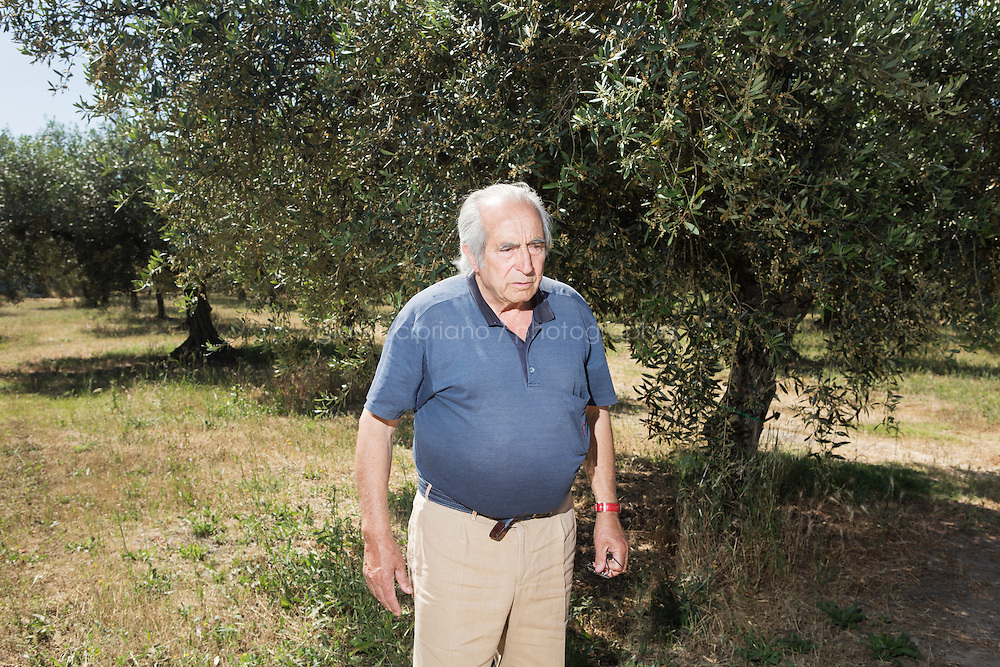 """CASTELVETRANO, ITALY - 29 MAY 2015: Antiquities dealer and olive oil producer Gianfranco Becchina (76) is here at Tenuta Pignatelli, his estate where he lives and produces the """"Olio Verde"""" olive oil in Castelvetrano, Sicily, Italy, on May 29th 2015.<br /> <br /> Gianfranco Becchina is an Italian antiquities dealer who was taken to trial in Italy of illegally dealing in antiquities. Gianfranco Becchina dealing antiquities in Basel, Switzerland, in the 1970s, and has sold material to major museums including the Louvre, the Boston Museum of Fine Arts, the Metropolitan Museum, the Princeton University Art Museum and the J. Paul Getty Museum. Mr Becchina claims to have stopped dealing ancient art in 1994. Since 1989 he produces the olive oil """"Olio Verde"""" in Tenuta Pignatelli, his estate in the heart of the Valle del Belice, Sicily, where the Nocellara del Belice olive is grown."""