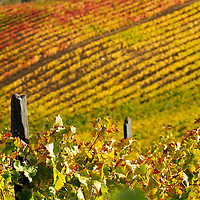 Vineyards at the Douro valley in autumn colors