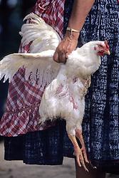 Chicken Sacrafice