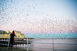 © Licensed to London News Pictures. 20/01/2017. Aberystwyth, Wales, UK. At first light on a cold a crisp January morning,  a keen bird watcher photographs as the thousands of tiny starlings burst out from their overnight roost under Aberystwyth pier to return to their feeding grounds in the fields and marshes in Ceredigion in west Wales .  Photo credit: Keith Morris/LNP