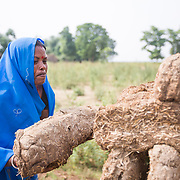 CAPTION: For centuries, dried cow dung has been used as a source of fuel in India's villages. LOCATION: Singhilpur, Saran District, Bihar, India. INDIVIDUAL(S) PHOTOGRAPHED: Meena Devi.