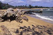 Monk seal, Wailua Beach, Kauai, Hawaii<br />