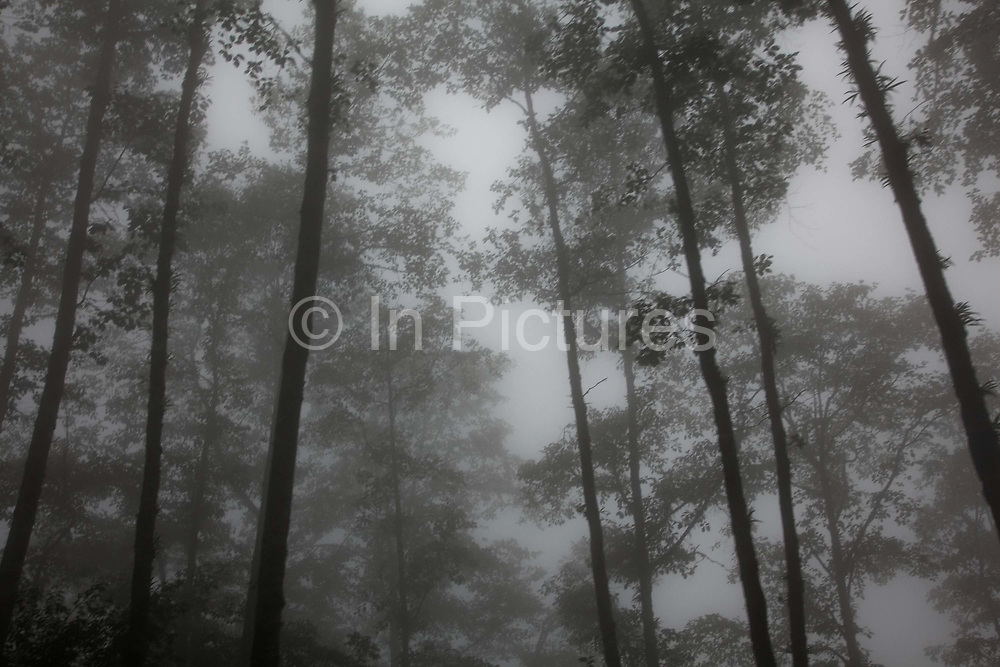 Low hanging clouds in Dolakha district in Nepal. A mountain road in 2.5 km hight is obscured by wet fog. The summer months is the rainy season and clouds are often obscuring the view of the Himalaya.
