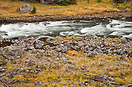 The Firehole River flows through a  canyon in Yellowstone National Park in Wyoming, USA   The Firehole River flows north 21 miles from its source in Madison Lake on the Continental Divide to join the Gibbon River to form the Madison River.  The Firehole flows through several significant geyser basins in the park.  The river was named by early trappers for the steam that makes it appear to be smoking as if on fire...The river is surrounded by geothermal features which empty water into it. One effect of the input of this water is to increase the temperature of the water. Temperatures in the river have been measured as high as 30 °C (86 °F) and average 5 to 10 °C (9 to 18 °F) higher than areas upstream of geothermal influence...Firehole River has been a fishing mecca since the late 19th century and is known today for its excellent fly fishing.