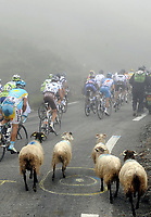 Sykkel<br /> Tour de France 2010<br /> 22.07.2010<br /> Foto: PhotoNews/Digitalsport<br /> NORWAY ONLY<br /> <br /> GEITER I HOVEDFELTET<br /> <br /> ETAPE 17 : PAU - COL DU TOURMALET