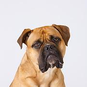 20170325 Dog Audition