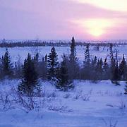 Wapusk National Park. Northern Manitoba. Canada..Wapusk National Park,Spring. Northern Manitoba. Canada.