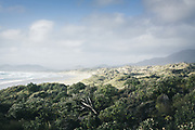 Coastal bush in Mason Bay, The Southern Circuit, Stewart Island / Rakiura, New Zealand Ⓒ Davis Ulands | davisulands.com