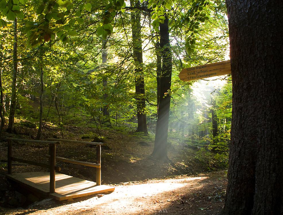 Hiking trail in Hochharz National Park near Bad Harzburg, Germany