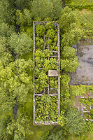 Aerial view of an old ruins covered by green vegetation in Estonia.