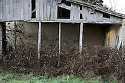 old abandoned barn with weeds growing inside