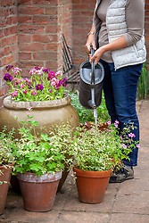 Watering patio containers in summer