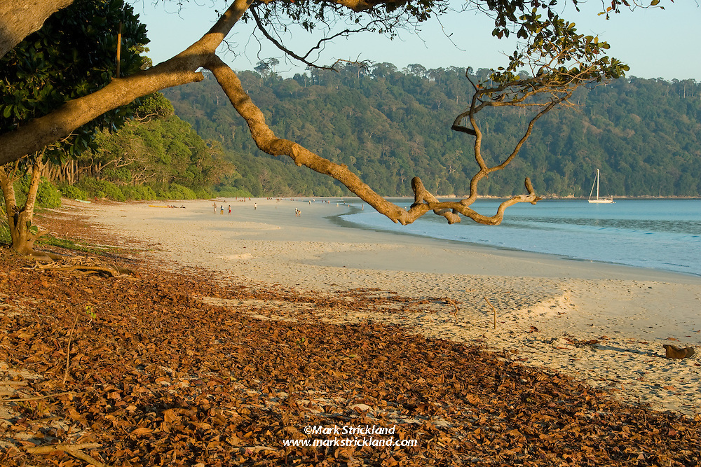 Blessed with fine white sand, clear unpolluted water and bordered by virgin rainforest, Havelock Island's Radhanagar Beach, a.k.a. Beach Number 7 was voted Asia's Best Beach by Time Magazine.  Andaman Islands, Andaman Sea, India