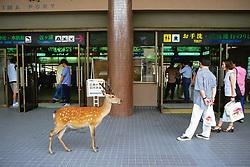 Sika Deer & People