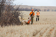 Bob and Becky Ciulla hunt pheasants in Montana with their English Setter, Jasper