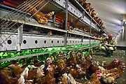 Nederland, Doetinchem, 11-9-2014Op bezoek bij een pluimveehouder met scharrelkippen.Foto: Flip Franssen/Hollandse Hoogte