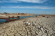 The Mesopotamian marshlands of southern Iraq, a rare wetland in a sea of desert. The wetlands are fed from the waters of the river Tigris and Euphrates. Drought is often an issue in Iraq but a lack of rainfall, internal political strife and the damming of rivers further up-stream in Turkey have combined to make the current situation dire.