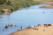 People and cattle at the waters edge on a river in Amboasary Sud, near the Berenty Reserve, Madagascar