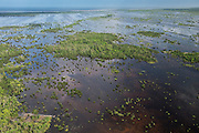 Wetland Shell Beach<br /> North GUYANA<br /> South America