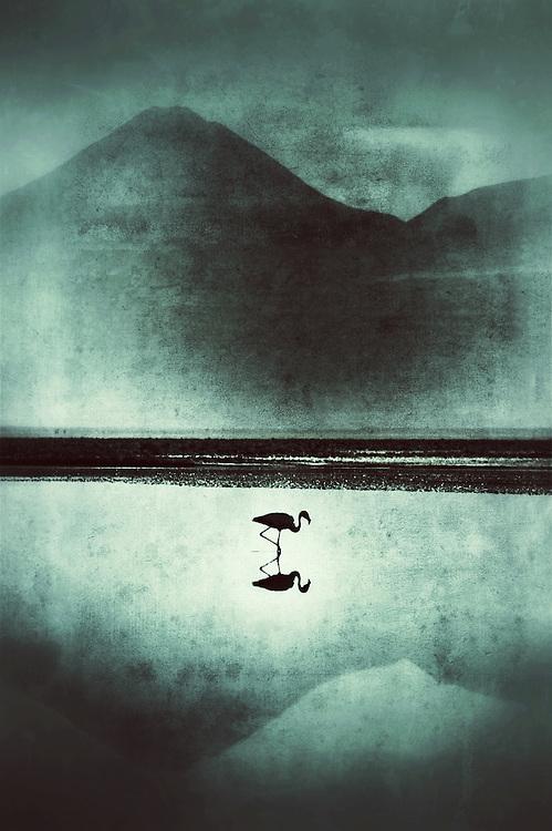 A flamingo stands in a high desert lake on Chile's Atacama Desert.