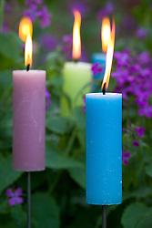 Candles amongst purple honesty - Lunaria annua