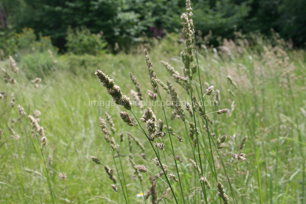 Long grasses